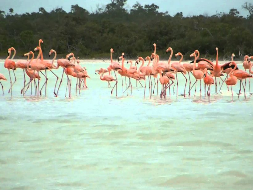 las_coloradas_rosatours_mx_4